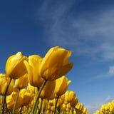 μπλε ουρανός κάτω Στοκ φωτογραφία με δικαίωμα ελεύθερης χρήσης