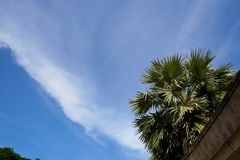 Μπλε ουρανός και σύννεφα με Areca το φοίνικα ή betel καρυδιών - καρύδια Στοκ Φωτογραφίες