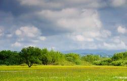μπλε ουρανός λιβαδιών Στοκ Εικόνες