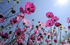 μπλε ουρανός λουλουδ& Στοκ Φωτογραφίες
