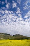 μπλε ουρανός λουλουδ& Στοκ Φωτογραφία