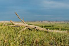 Μπλε ουρανός πέρα από το κομμάτι του νεκρού ξύλου στον τομέα στοκ φωτογραφίες με δικαίωμα ελεύθερης χρήσης