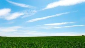 μπλε ουρανός πεδίων Στοκ φωτογραφία με δικαίωμα ελεύθερης χρήσης
