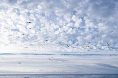 Μπλε ουρανός, σύννεφα και κοπάδι των πουλιών στοκ φωτογραφίες