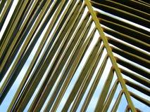 μπλε ουρανός φοινικών φύλλων Στοκ φωτογραφία με δικαίωμα ελεύθερης χρήσης