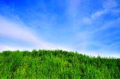 μπλε ουρανός χλόης Στοκ Φωτογραφία