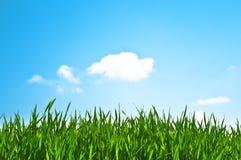 μπλε ουρανός χλόης Στοκ Φωτογραφίες