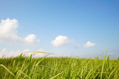 μπλε ουρανός χλόης Στοκ Εικόνα