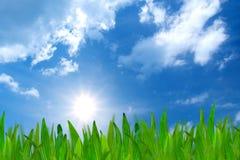 μπλε ουρανός χλόης Στοκ Εικόνες