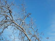 Μπλε ουρανός Copyspace με το απογυμνωμένο δέντρο Στοκ φωτογραφία με δικαίωμα ελεύθερης χρήσης