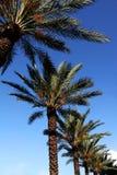 μπλε ουρανός palmtree Στοκ Εικόνες