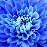 μπλε πέταλα λουλουδιών Στοκ εικόνα με δικαίωμα ελεύθερης χρήσης