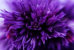 μπλε πέταλα Στοκ φωτογραφίες με δικαίωμα ελεύθερης χρήσης