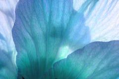 μπλε πέταλα Στοκ Φωτογραφία