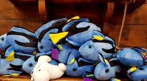 Μπλε παιχνίδια βελούδου ψαριών Στοκ εικόνα με δικαίωμα ελεύθερης χρήσης
