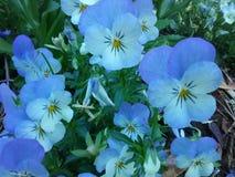 μπλε παφλασμός Στοκ Φωτογραφίες