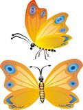 μπλε πεταλούδα κίτρινη Στοκ Εικόνες