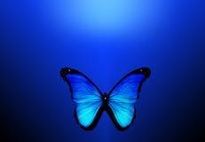 Μπλε πεταλούδα στην μπλε ανασκόπηση Στοκ Φωτογραφία