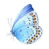 Μπλε πεταλούδα Watercolor συρμένος εικονογράφος απεικόνισης χεριών ξυλάνθρακα βουρτσών ο σχέδιο όπως το βλέμμα κάνει την κρητιδογ στοκ εικόνες