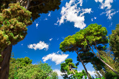 μπλε πιό forrest πράσινος ουρανό&sig Στοκ φωτογραφία με δικαίωμα ελεύθερης χρήσης