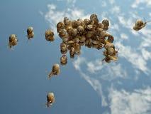 μπλε πολλά σαλιγκάρια ο&u Στοκ Φωτογραφίες