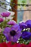 Μπλε, πορφυρά και ρόδινα anemones Στοκ φωτογραφίες με δικαίωμα ελεύθερης χρήσης