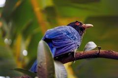 Μπλε πουλί στοκ εικόνα με δικαίωμα ελεύθερης χρήσης