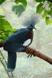 μπλε πουλιών Στοκ Εικόνα