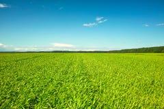 μπλε πράσινος ουρανός χλόης πεδίων φρέσκος ηλιόλουστος Στοκ φωτογραφία με δικαίωμα ελεύθερης χρήσης