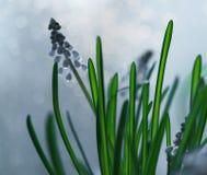 Μπλε πράσινο φύλλο κινηματογραφήσεων σε πρώτο πλάνο λουλουδιών bokeh backgraund στοκ εικόνες