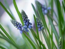Μπλε πράσινο φύλλο κινηματογραφήσεων σε πρώτο πλάνο λουλουδιών bokeh backgraund στοκ φωτογραφία