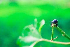 μπλε προγραμματιστικό λά&thet Στοκ Φωτογραφία