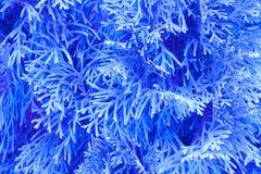 μπλε πρωί κλάδων ανασκόπησης Στοκ εικόνες με δικαίωμα ελεύθερης χρήσης