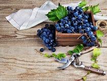 Μπλε σταφύλια στο ξύλινο κιβώτιο στοκ εικόνες με δικαίωμα ελεύθερης χρήσης