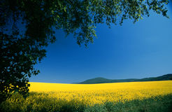 μπλε τοπίο κίτρινο στοκ εικόνες με δικαίωμα ελεύθερης χρήσης