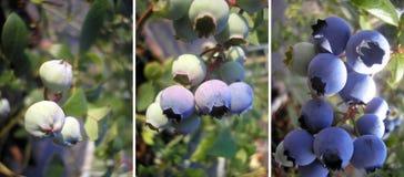μπλε υγεία s Στοκ Φωτογραφίες