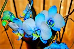 Μπλε υπόβαθρο και ταπετσαρίες λουλουδιών ορχιδεών στην κορυφή υψηλή - ποιοτικές τυπωμένες ύλες στοκ εικόνα με δικαίωμα ελεύθερης χρήσης
