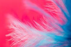 Μπλε φτερό σε ένα κόκκινο υπόβαθρο κλείστε Στοκ φωτογραφίες με δικαίωμα ελεύθερης χρήσης