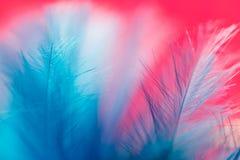 Μπλε φτερό σε ένα κόκκινο υπόβαθρο κλείστε Στοκ Φωτογραφία