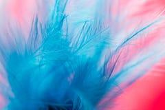 Μπλε φτερό σε ένα κόκκινο υπόβαθρο κλείστε Στοκ Εικόνες