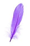 μπλε φτερό στοκ φωτογραφίες με δικαίωμα ελεύθερης χρήσης