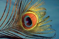 μπλε φτερό picok Στοκ εικόνες με δικαίωμα ελεύθερης χρήσης