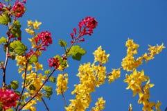 μπλε φωτεινός ουρανός λ&omicr Στοκ εικόνες με δικαίωμα ελεύθερης χρήσης