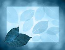 μπλε φύλλα ανασκόπησης Στοκ εικόνες με δικαίωμα ελεύθερης χρήσης