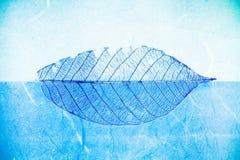 Μπλε φύλλο Στοκ Εικόνες