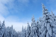 μπλε χιονώδη δέντρα ουραν&o στοκ εικόνες