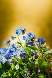 μπλε χρυσός λουλουδιών ανασκόπησης nots Στοκ φωτογραφίες με δικαίωμα ελεύθερης χρήσης