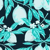 μπλε χρωματισμένο σχέδιο λεμονιών Στοκ εικόνα με δικαίωμα ελεύθερης χρήσης