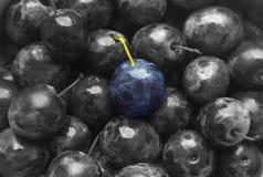 Μπλε χρώμα δαμάσκηνων σύστασης υποβάθρου γραπτός μονοχρωματικός φρούτων όμορφος juicy μεταλλινών φρούτων γλυκός στοκ εικόνες