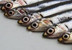 Μπλε ψάρια: αντσούγιες της Μεσογείου στοκ εικόνα